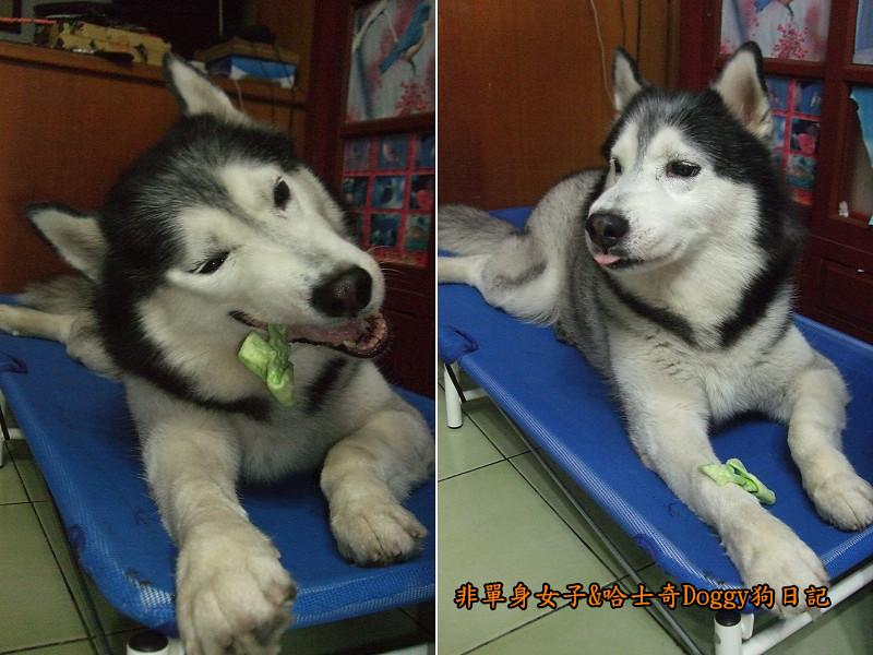 哈士奇Doggy愛狗零食22