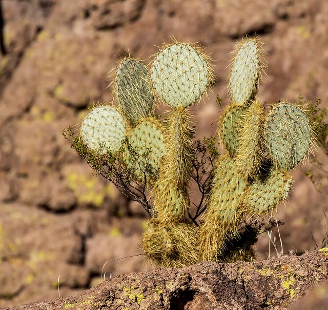Cactus 4_7D2_120416