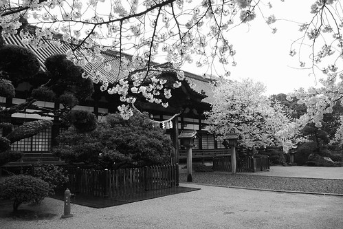 Konda-Hachimangu Shrine, Habikino, Osaka pref. on APR 04, 2016 (8)