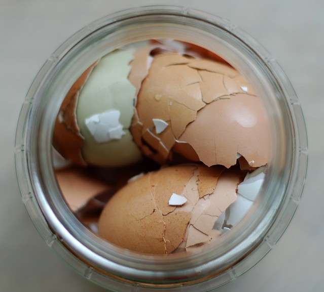 Save eggshells to ensure healthier tomato plants by Eve Fox, the Garden of Eating, copyright 2016