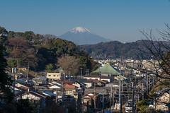 富士山と横須賀線@名越切通入口付近