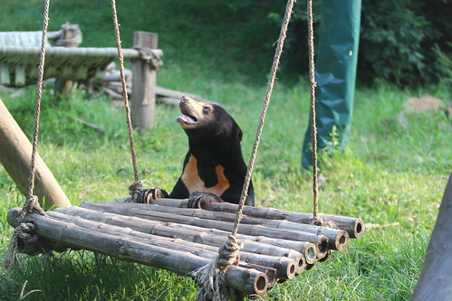Arkte enjoys the hammock at VBRC