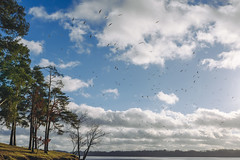 Birds | Kaunas Sea #36/365