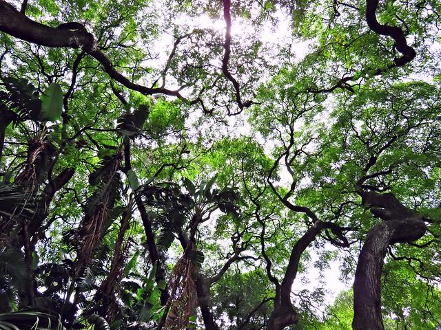 TreesJardinBotanicoBA