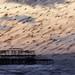 Blurmuration and West Pier by Alan MacKenzie