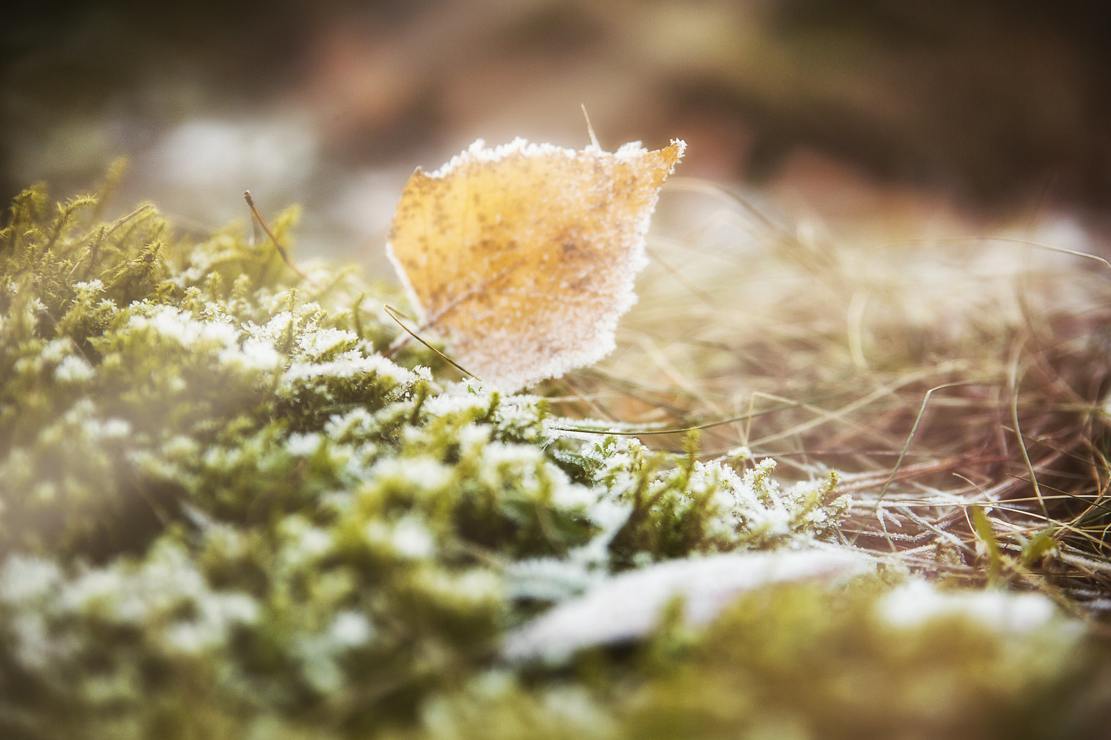 Осень в миниатюре