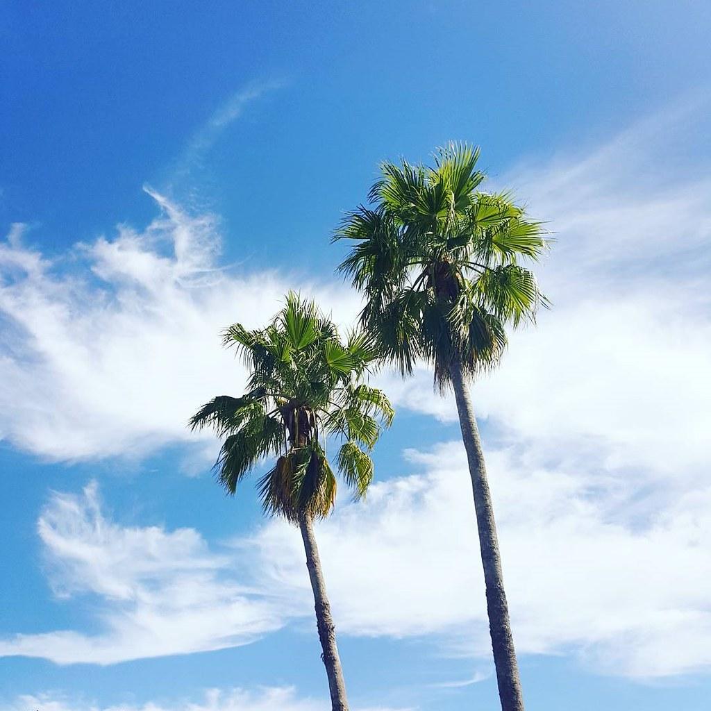 Cool weather skies. 🌴💙 #latepost