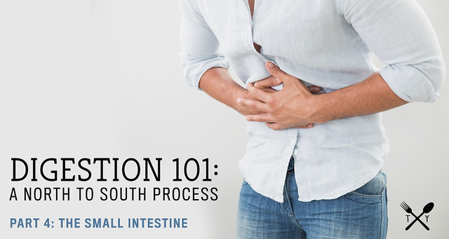 Digestion 101 // Part 4: The Small Intestine