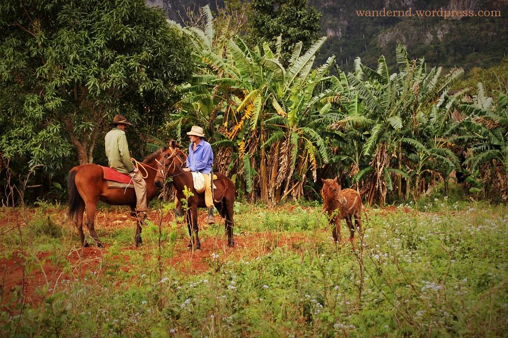 Kuba - Valle d Vinales