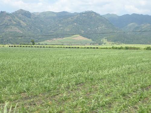 P16-Negros-San Carlos-Dumaguete-Route (45)