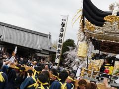 2016年 加西市北条 桜咲くなかでの北条節句祭 GH4+蜂の巣マイク