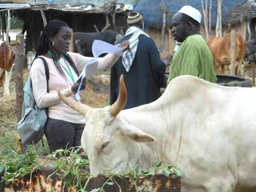 Interviewing farmers in the Senegal dairy genetics project