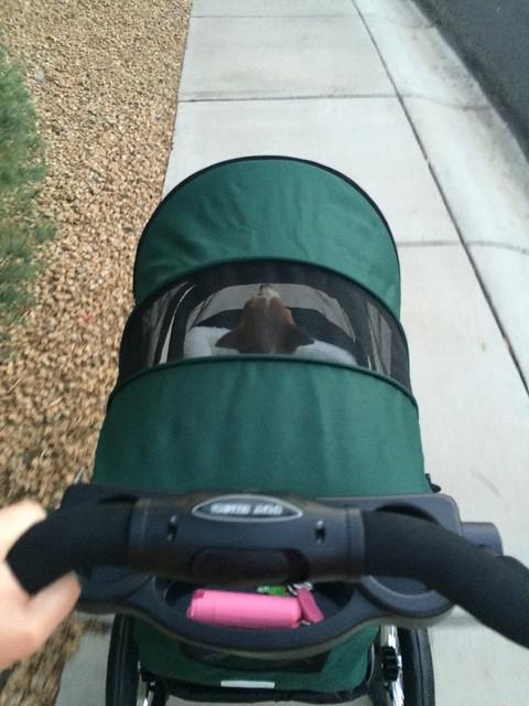 Ojo In Stroller