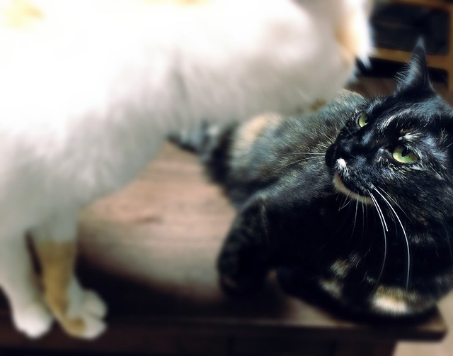 #cat #cats #catsofinstagram #catstagram #instacat #instagramcats #neko #nekostagram #猫 #ねこ #ネコ ネコ部 #猫部 #ぬこ #にゃんこ #ふわもこ部 #サビ猫 #三毛猫