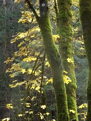 Autumn and moss
