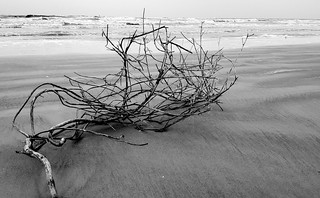 Wood on Sand (B&W)