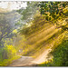 Beautiful golden sun rays in the forest of Masinagudi, India by KS Photography!