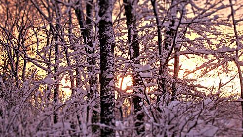 blue winter sunset sky color nature beautiful dark outdoors photography photo twilight flickr pretty foto image dusk massachusetts sony picture newengland vivid cybershot serene capture fieldofdreams skyporn plainvillemassachusetts dscw3000 newenglandwintertwilight