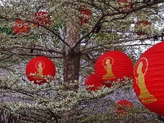 the Buddha lanterns