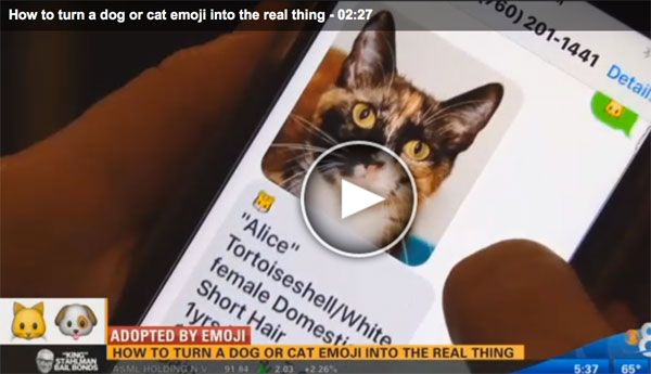 from-emoji-to-cat