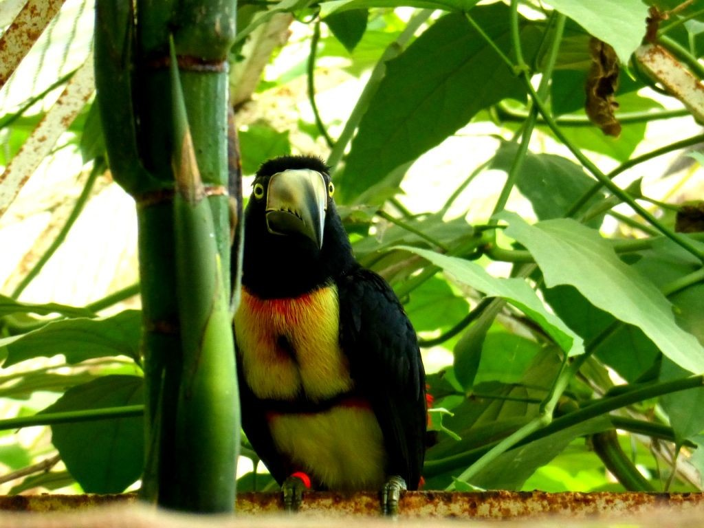 Costa Rican Bird