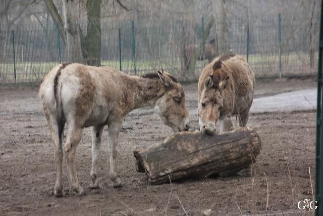 Besuch Tierpark Friedrichsfelde 14.02.201649
