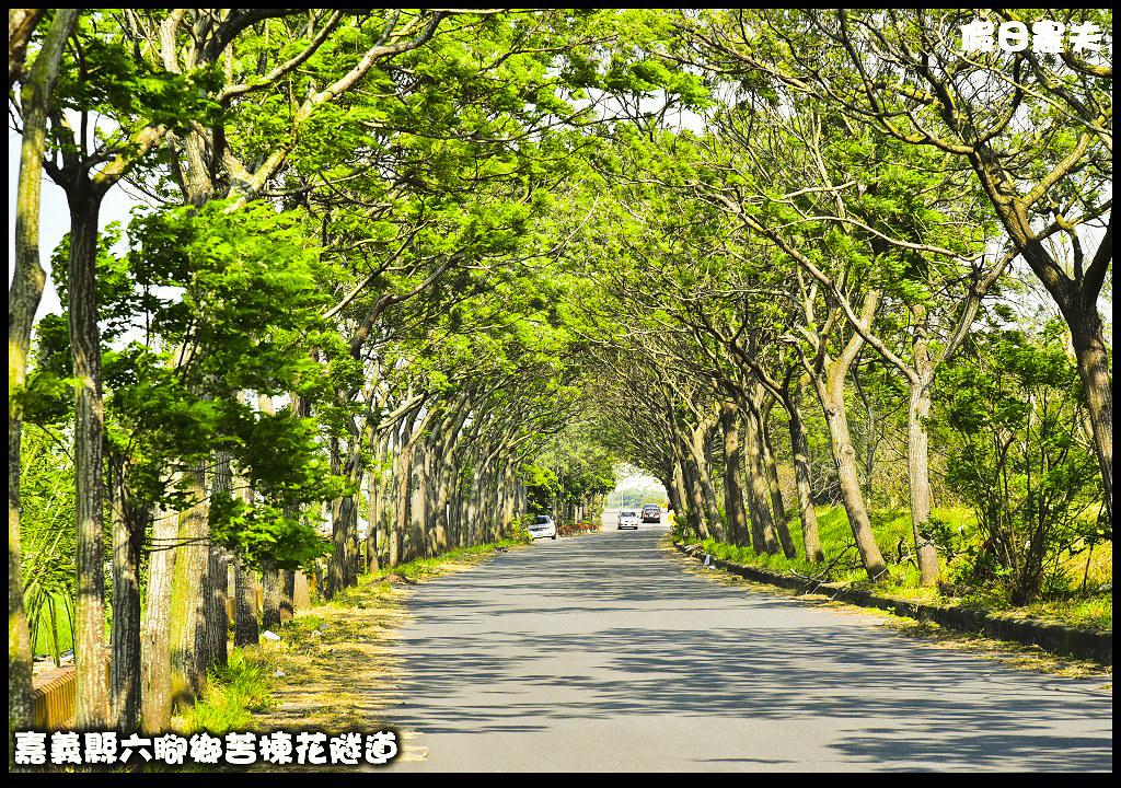 苦楝花隧道DSC_3856