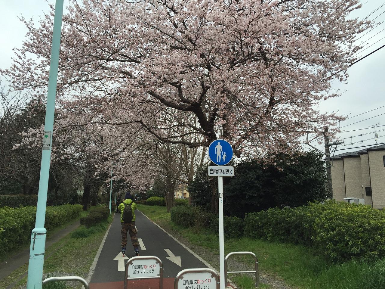 20160402_お花見CR (1)