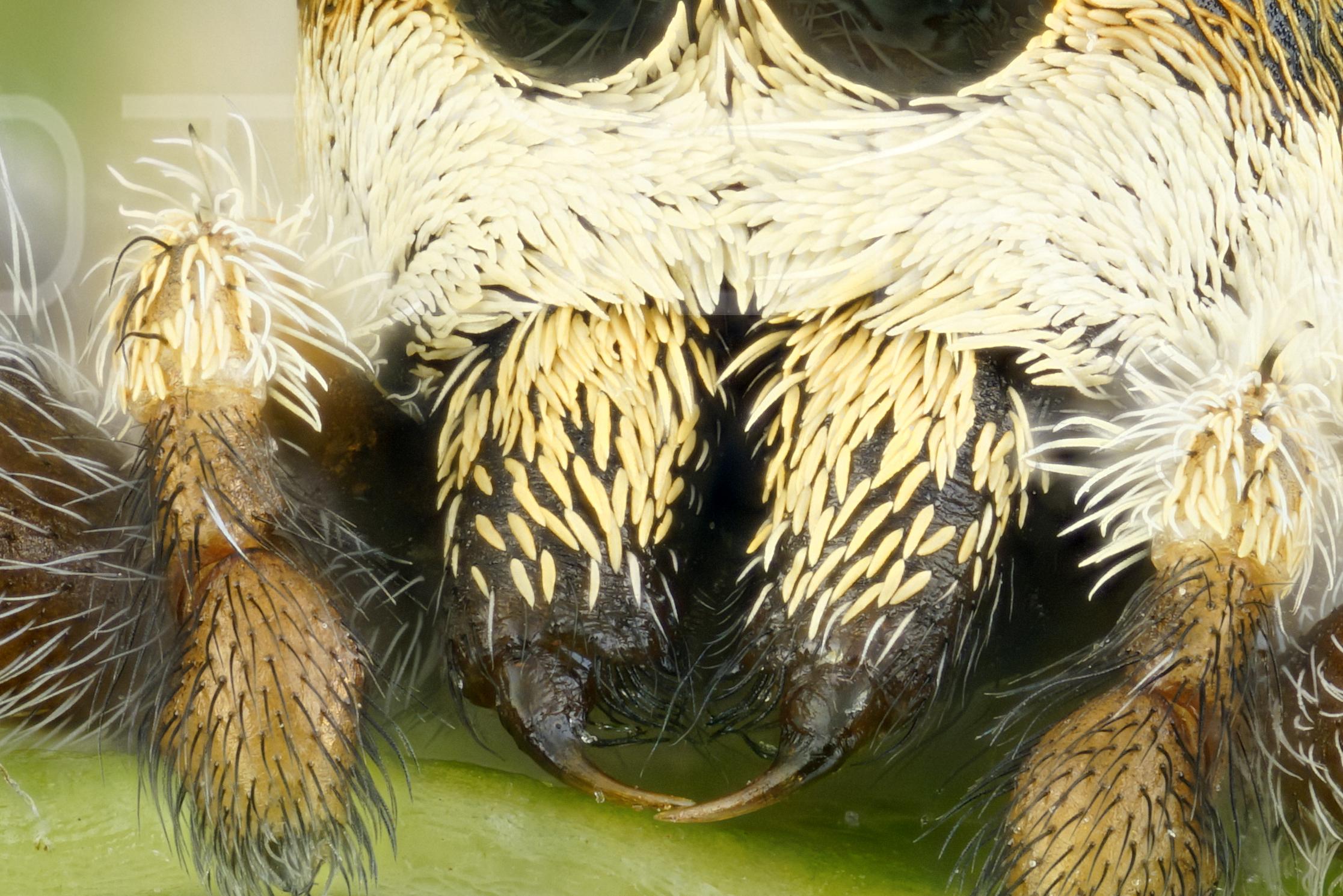 Foro AFT: NUEVO ENCUADRE Araña de la Tundra 6x (MACRO EXT) (1/3)