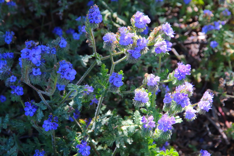 IMG_2669 Pacific Crest Trail
