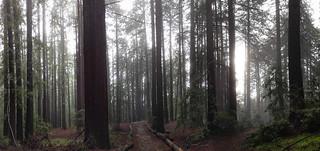 Image of Joaquin Miller. california panorama oakland unitedstates redwoods joaquinmillerregionalpark