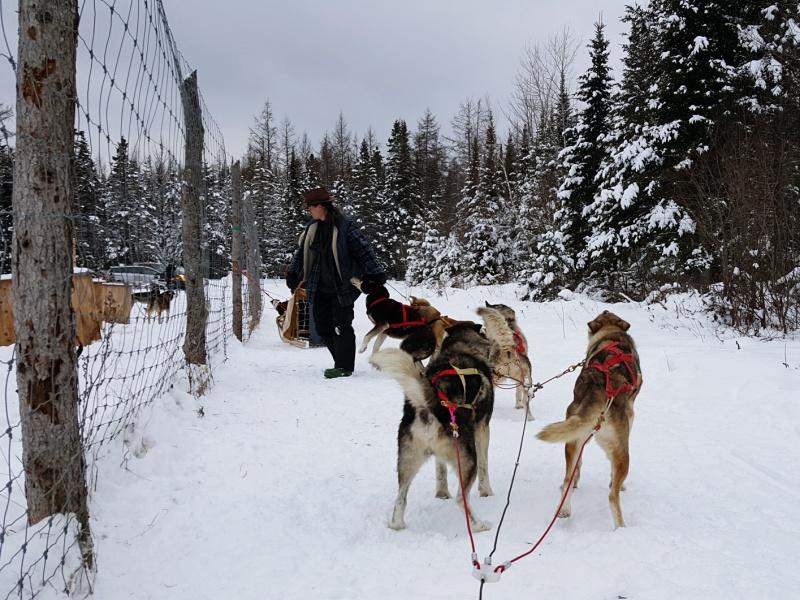 Aventure Inukshuk dogs