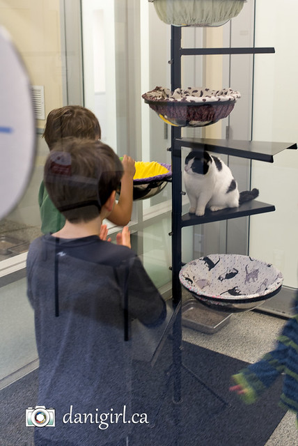 A birthday party at the Ottawa Humane Society