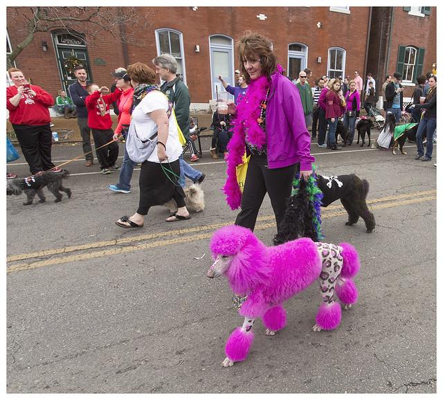 Dog Parade 2016-01-31 6