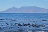 """Le Cap vu de """"Robben Island"""""""