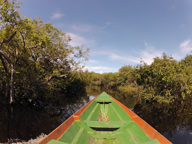 canoe submerged forest amazon tupana