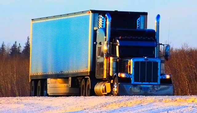 Black Pete in The Manitoba Winter Sun