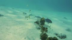 DSCN0684 -Bonefish