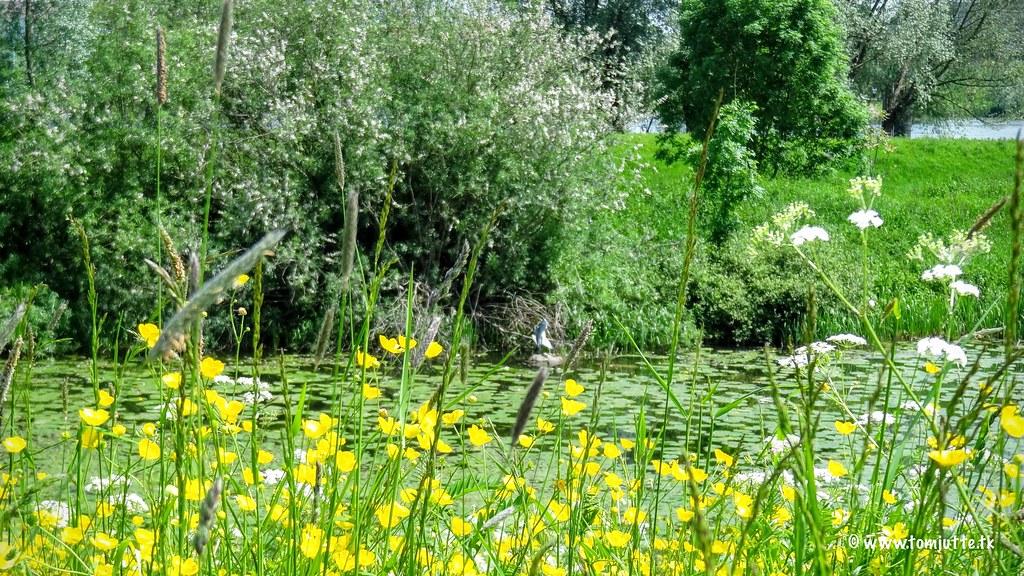 Spring is here..., Zutphen, Netherlands - 0655