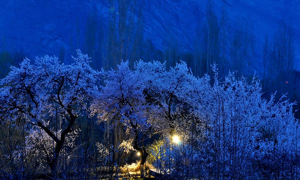 Spring Blossom in Gilgit Baltistan