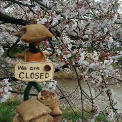 桜とMr.ホリディ