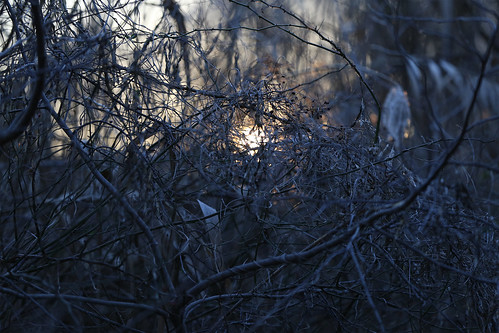 morning winter ny newyork sunrise canon li january longisland 6d 2016 sooc massapequapreserve canon70200f28lll canonef70200mmf28lisiiusm