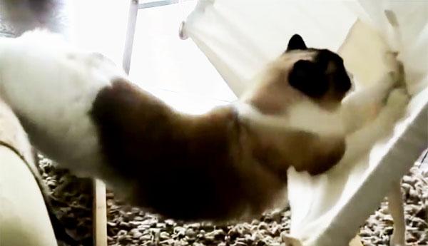 cat-and-hammock