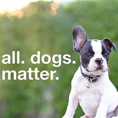 All Dogs Matter. Is your dog bored? Maybe acting depressed or even worse being destructive? Are you tired when you get home? Do you feel bad you don't have the time for a walk? Don't leave your dog home alone. We're here to help with your doggie dilemmas.