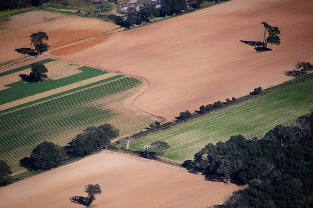 alberi solitari nel campo