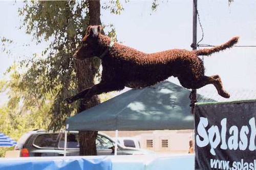 Skydockdog22