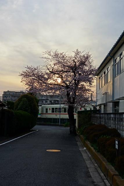 2016/03 叡山電車修学院車庫前の桜