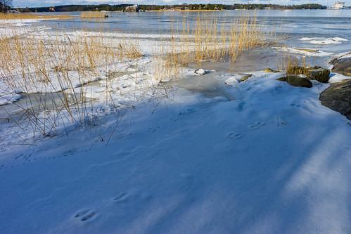 winter sea snow ice nature woodland suomi finland landscape turku outdoor shore prints hay archipelago ruissalo