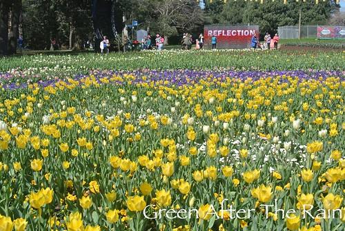150917 Canberra Floriade _09