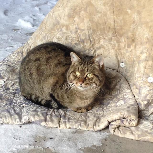 Тигруша - страж генератора, отогревает его, чтобы двигатель не замерз в мороз! #котикиправятмиром #котики #старыйкрым